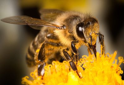 Harness the power of beekeeping