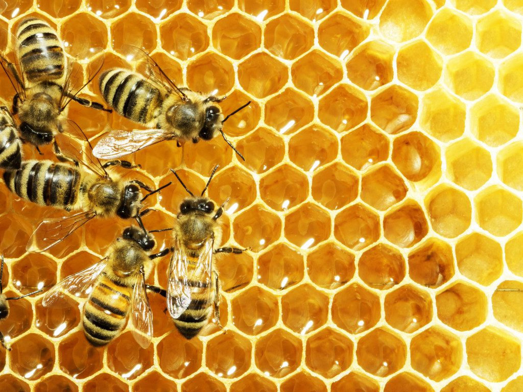 How To Start Bee Keeping In Preparation For The Apocalypse